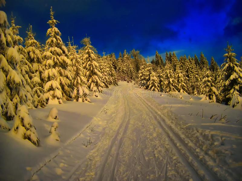 Cross country track in the spruce trees forest at winter daylight stock photo