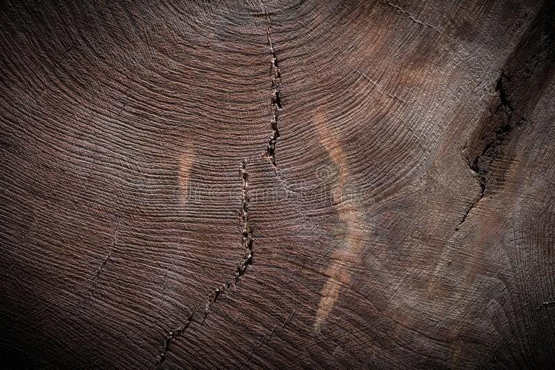 Cross cut vintage wood texture of tree trunk stock photo