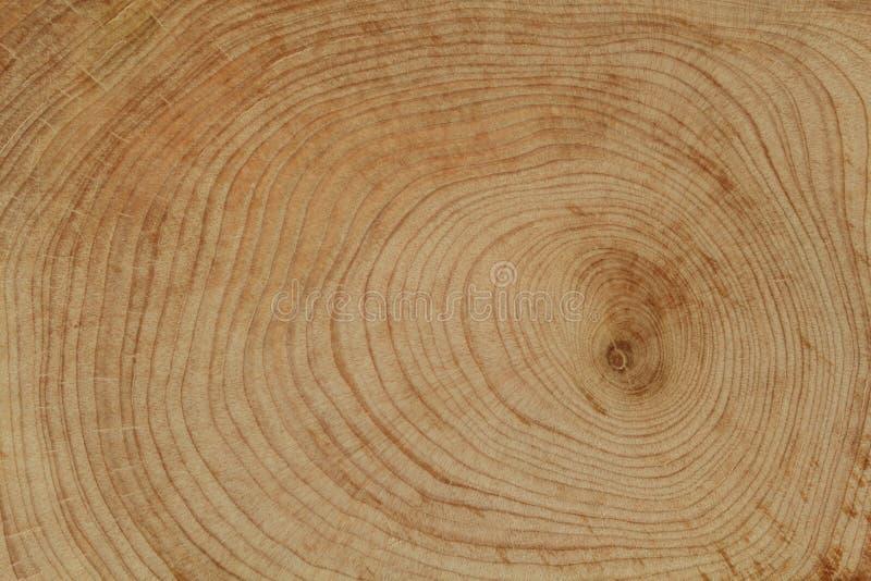 Cross cut wood texture royalty free stock photos