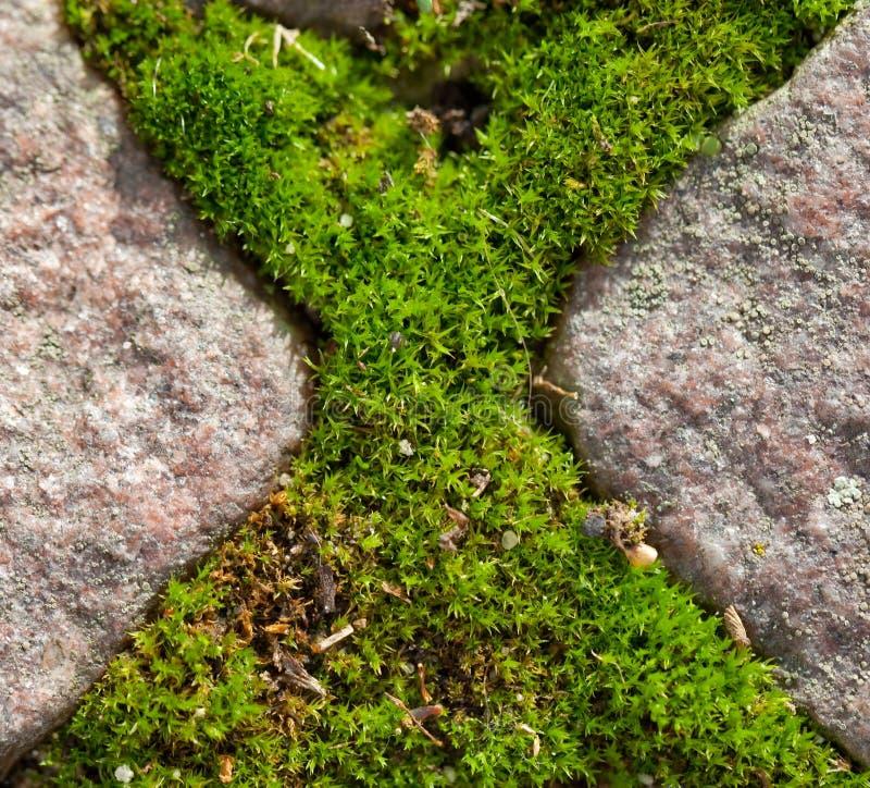 Cross of moss stock photos