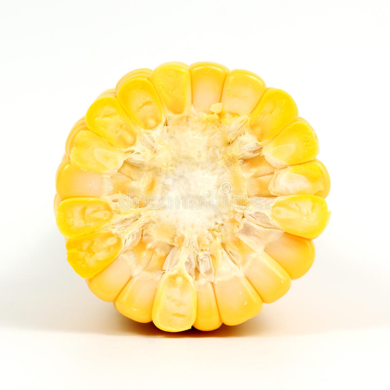 Cross section of corn royalty free stock photography