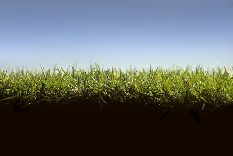 Cross section of grass lawn royalty free stock photos