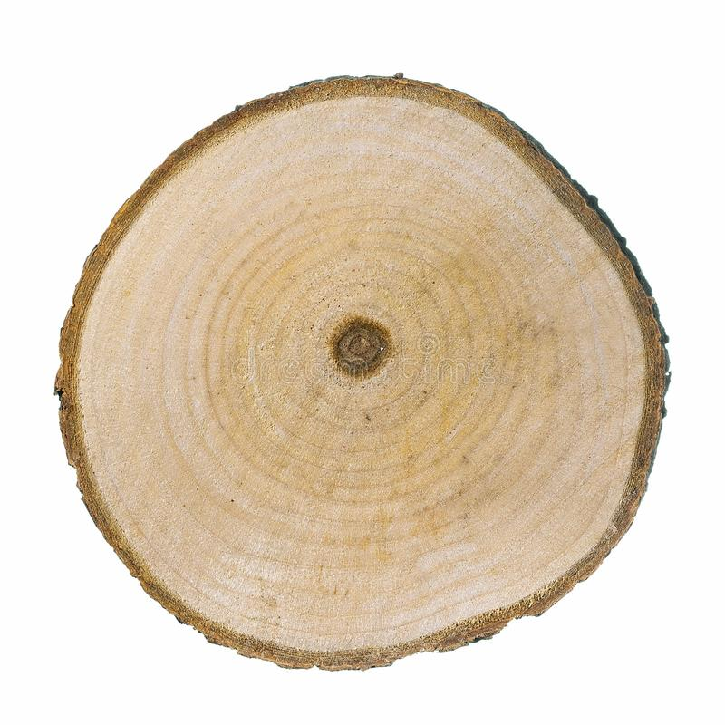 Cross section of larch tree trunk on white background. stock photography
