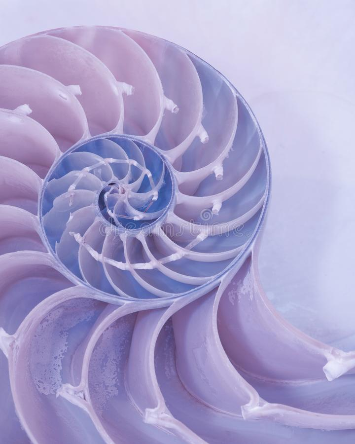 Free Cross Section Of A Nautilus Shell In Pastel Colors Stock Photo - 130773260