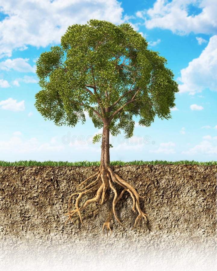 Free Cross Section Of Soil Showing A Tree With Its Roots. Stock Image - 32969491