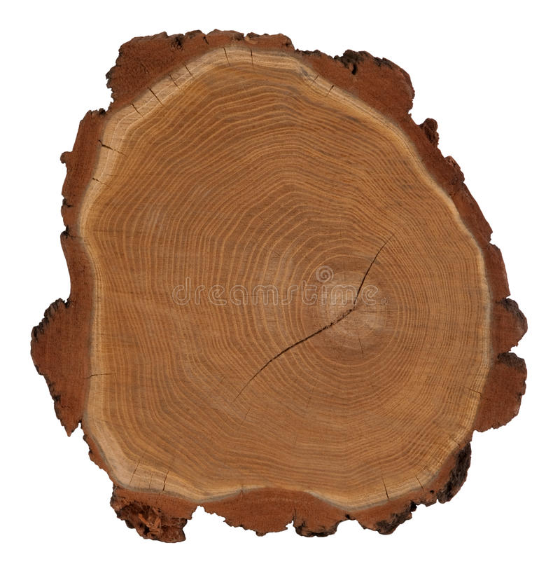 Free Cross Section Of Tree Trunk Stock Photos - 23729693