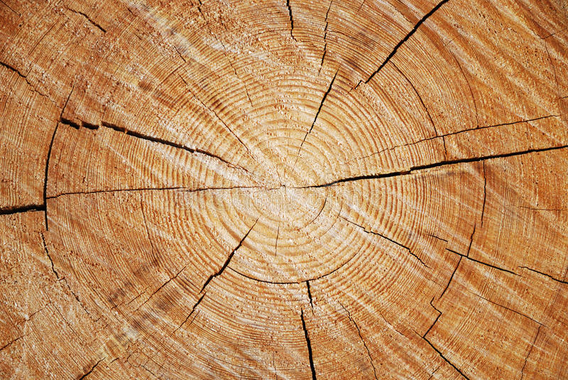 Download A Cross Section Of Old Tree Trunk Stock Image - Image of brown, cleft: 34482343