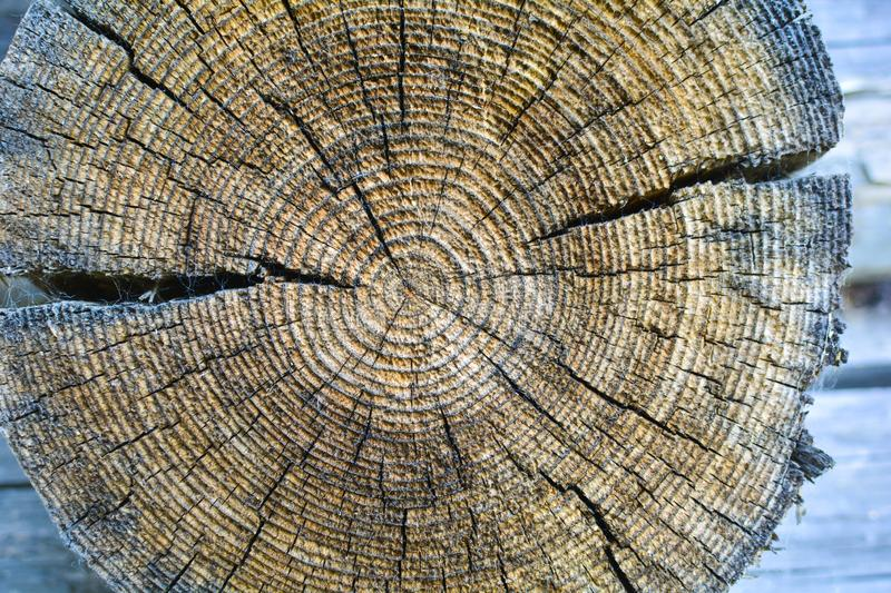 Cross-section of the old tree trunk, showing annual rings and cracks. wood texture royalty free stock photos