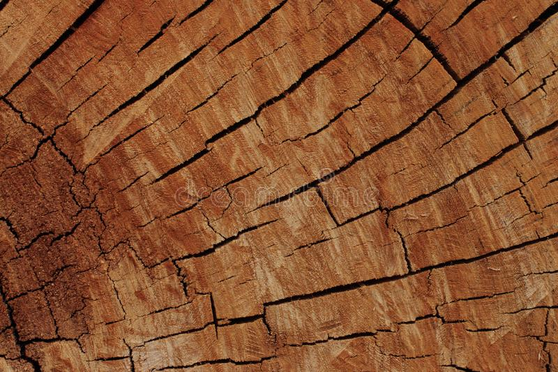 Cross section of rustic timber log background stock images