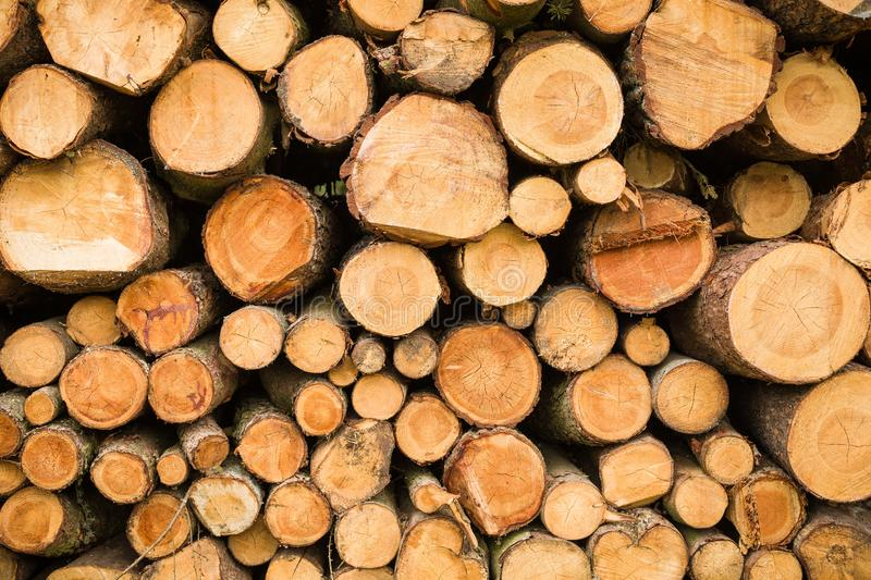 Cross section of the timber, cut trees, firewood stack for the background. Close up pile of logs background royalty free stock images