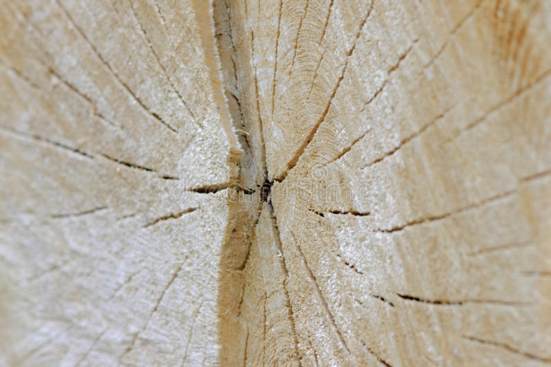 Cross section of the tree stock photos