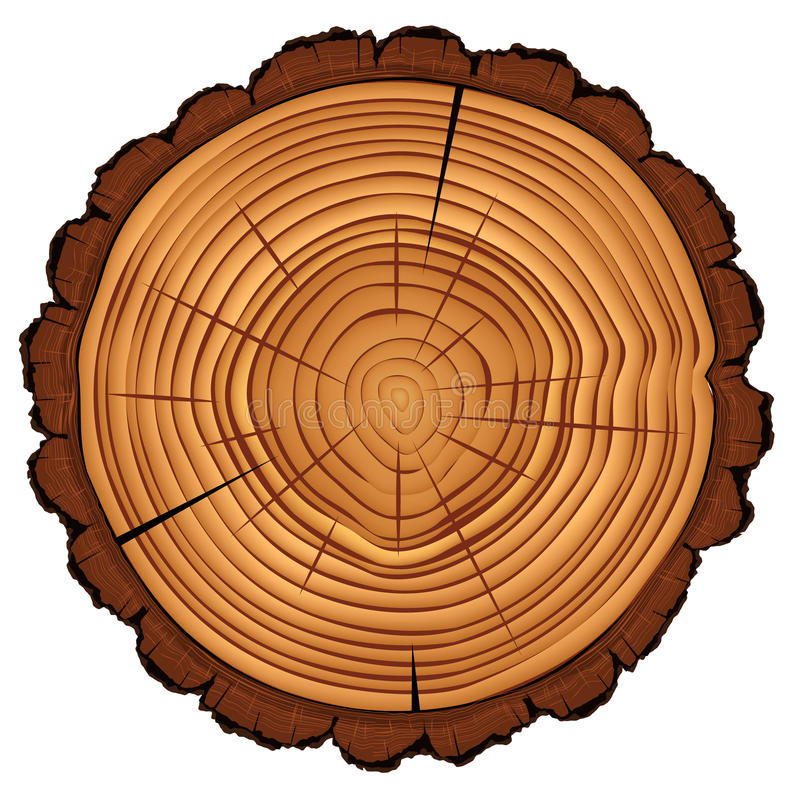 Cross section of tree stump isolated on white stock vector