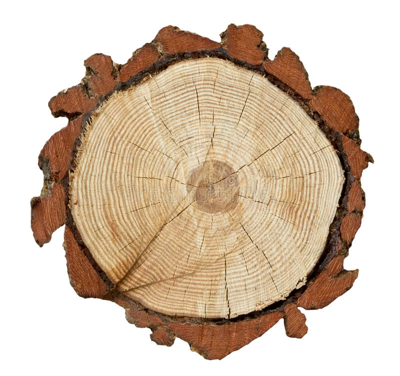 Cross-section of a tree trunk. Showing rings in the wood and layer of bark royalty free stock images