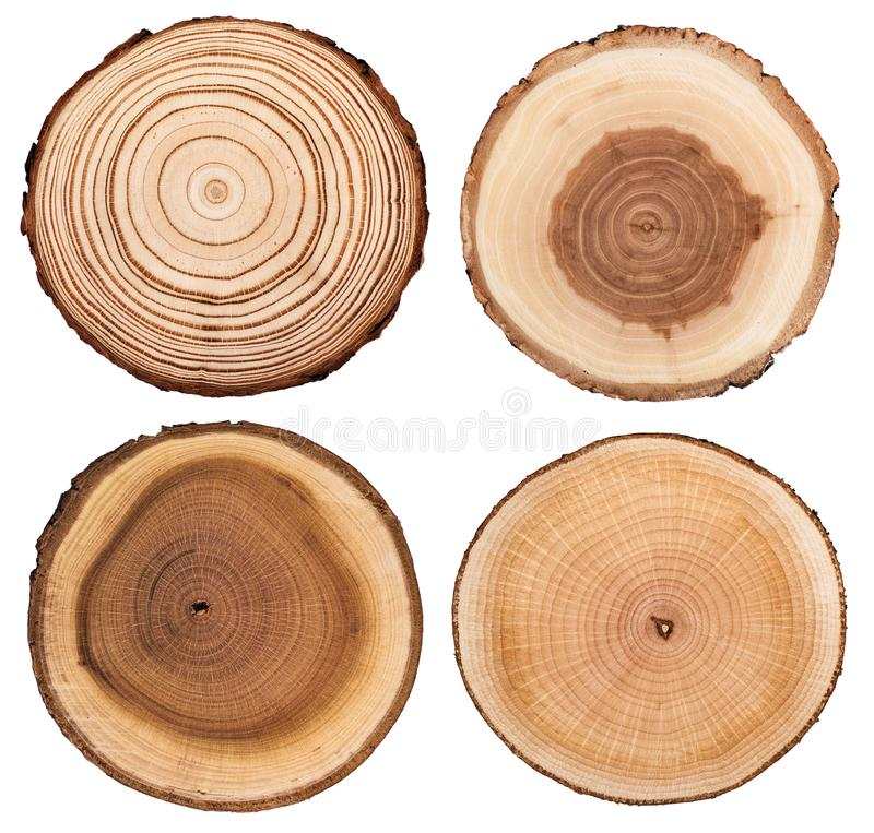 Cross section of tree trunk showing growth rings set isolated on white background. stock photo