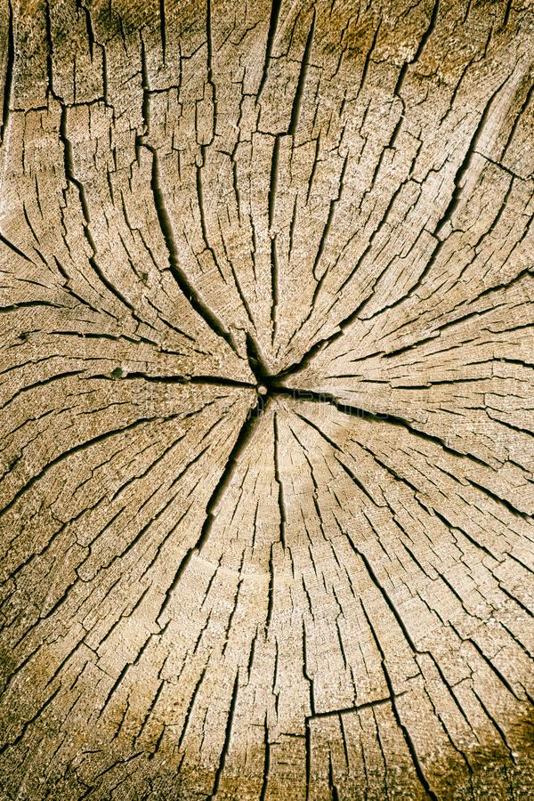 Wood texture and cracks. Cross-section of a tree. Wood texture and cracks royalty free stock photo