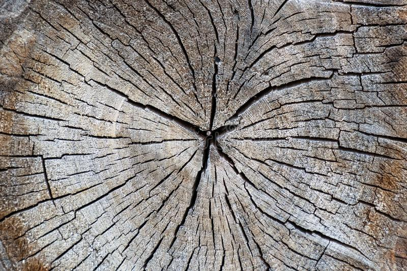 Wood texture and cracks. Cross-section of a tree. Wood texture and cracks stock photography