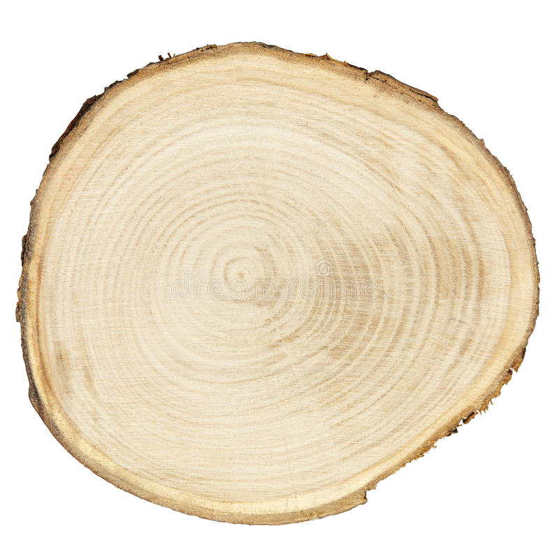 Cross section of wood royalty free stock image