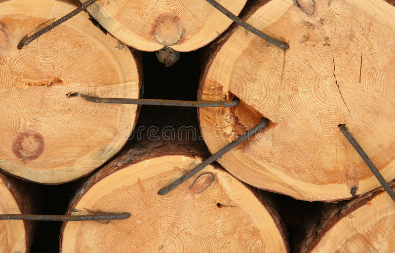 Download Cross-sectional Cut Of Tree Stock Photo - Image: 19209378