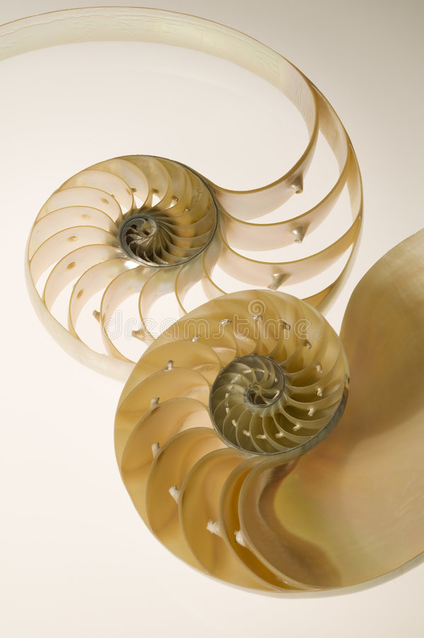 Cross seSectional cut of a nautilus shell
