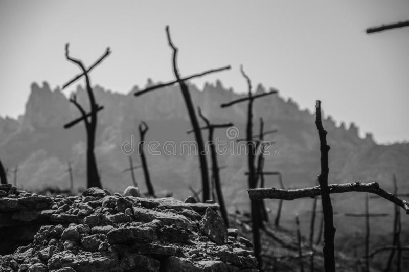 Cross shaped trees after forest fire. Cross shaped trees after a fire has burned the forest stock photo