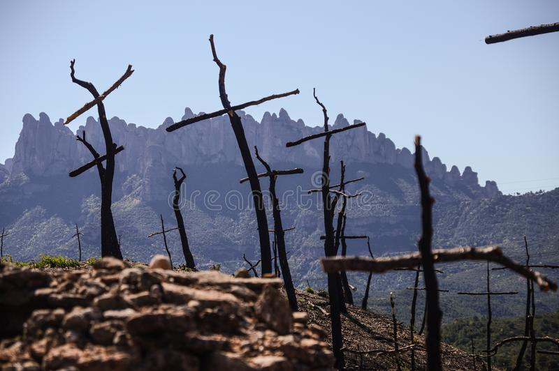 Cross shaped trees after forest fire. Cross shaped trees after a fire has burned the forest royalty free stock photos