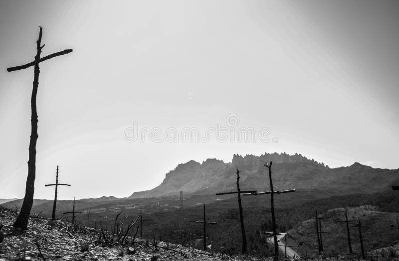 Cross shaped trees after forest fire. Cross shaped trees after a fire has burned the forest royalty free stock image