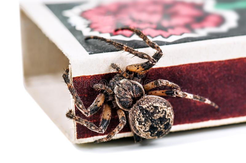 Cross spider on matchbox. Alive cross spider on matchbox isolated on white stock photography