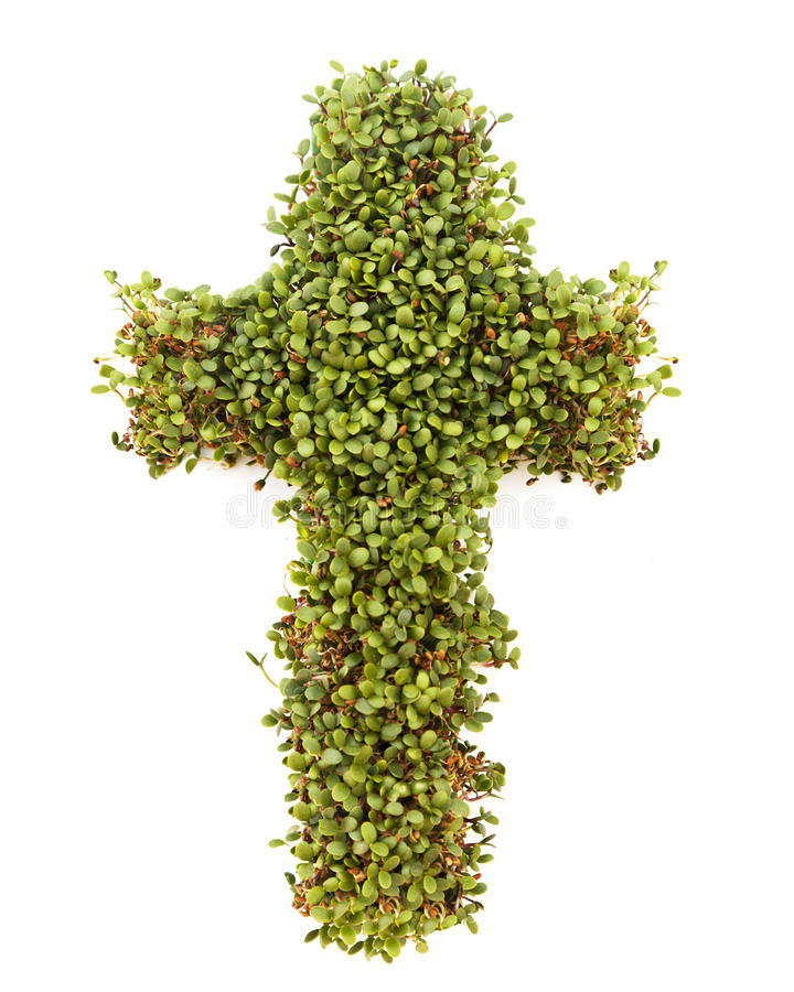 Cross of Sprouts stock photos