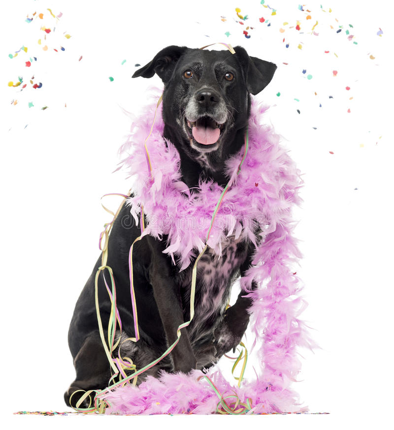 Free Crossbreed Dog Partying Stock Photography - 67200112