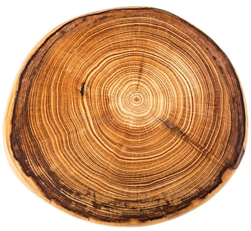 crossection d 39 un tronc d 39 arbre image stock image du croix fibre 52276839. Black Bedroom Furniture Sets. Home Design Ideas
