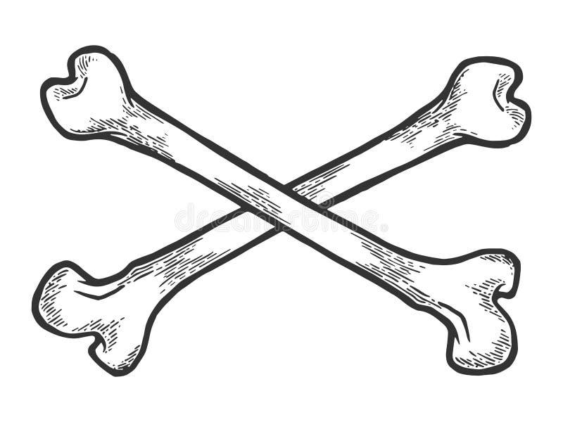 Crossed bones sketch engraving vector. Crossed bones. Pirate symbol sketch engraving vector illustration. Scratch board style imitation. Hand drawn image vector illustration