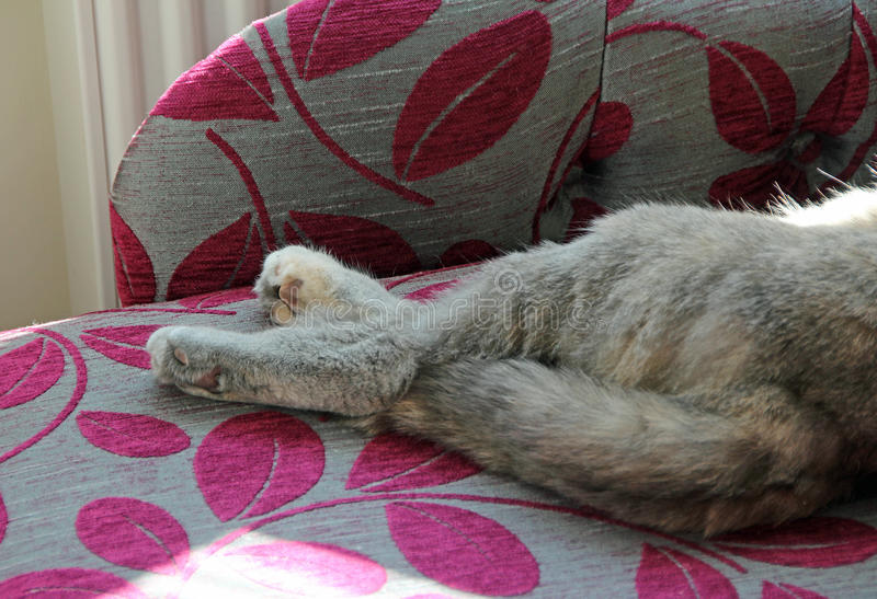 Download Crossed cat legs on chaise stock image. Image of cats - 70605697 : cat chaise lounge - Sectionals, Sofas & Couches