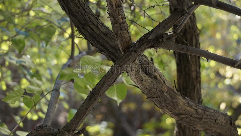 Crossed trunk. This is a normal photograph and you can think of it as whatever it is royalty free stock images