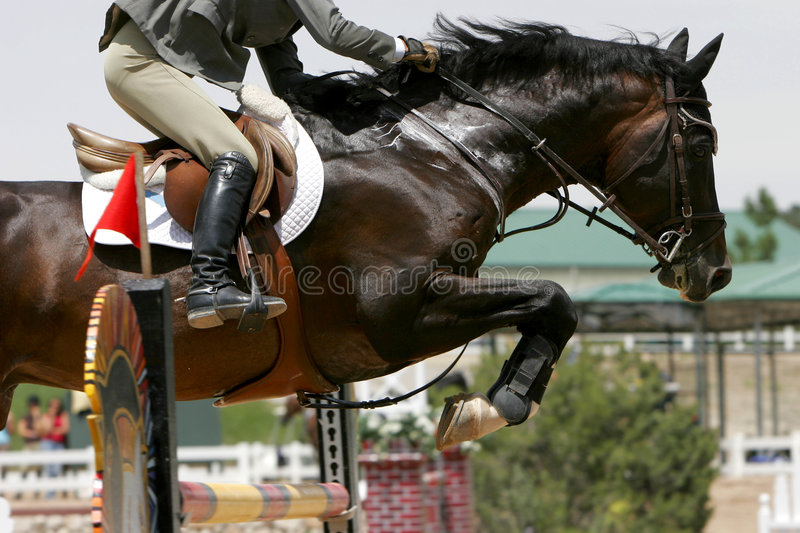 Crossing Hurdles - Equestrian royalty free stock images