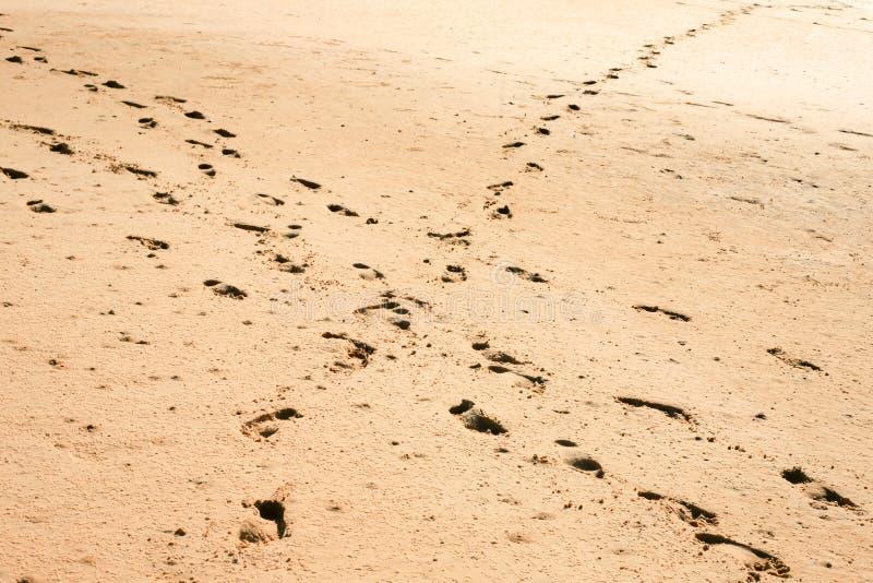 Crosspaths på sanden royaltyfri foto