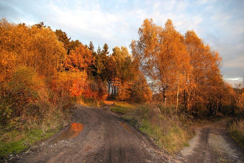 Download Crossroad stock photo. Image of crossroad, trees, season - 26219680