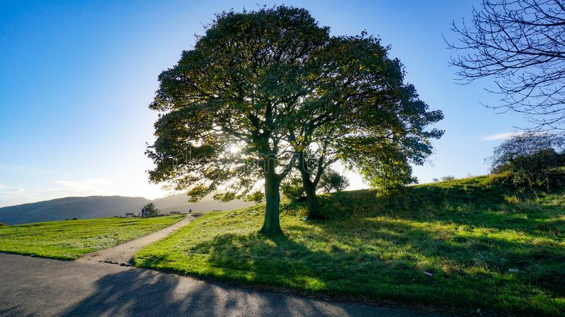 Crossroads with sun shining through tree stock photography