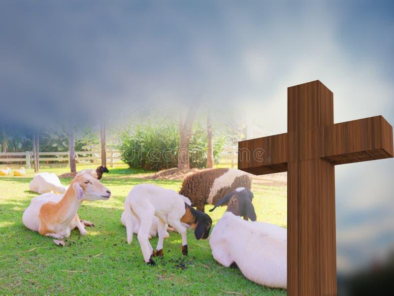 Crosss Con Un Grupo De Ovejas, Cordero De Dios, Representación 3d ...