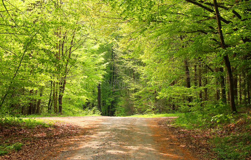 Crossway in a beech tree forest. Cross-way in a beech tree forest on a sunny day at springtime stock photography