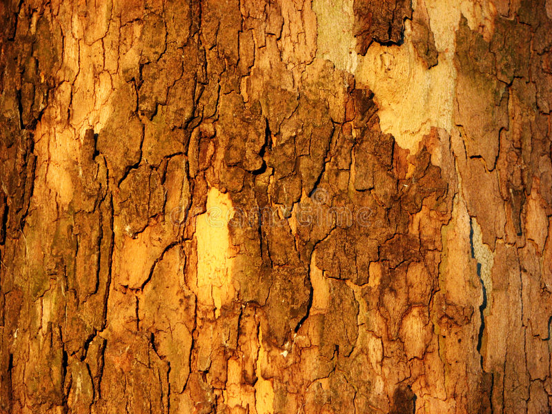 Crosta de madeira fotos de stock royalty free