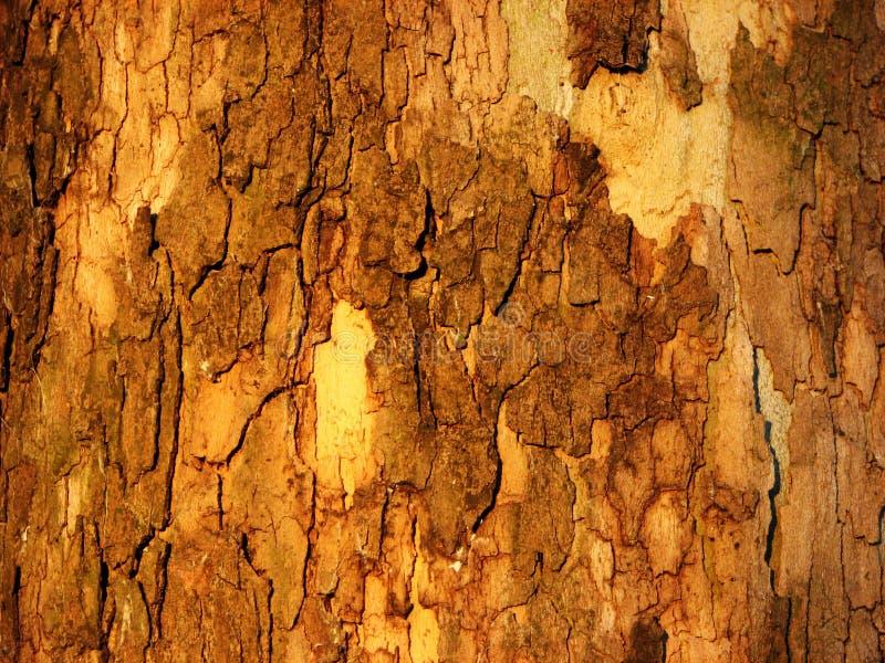 Crosta di legno fotografie stock libere da diritti