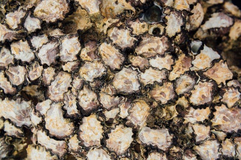 Crostacei delle coperture di struttura Molluschi delle coperture del fondo sulla spiaggia nelle coperture chiuse fotografie stock