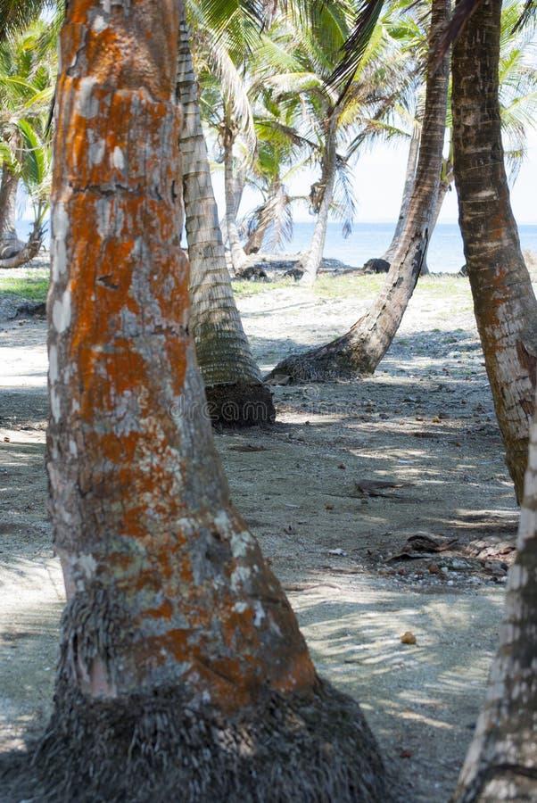 Crostacei, proporzione della natura, modello di Fibonacci Paradiso tropicale in Guna Yala, Kuna Yala, San BLas, isole, Panama spi immagine stock libera da diritti