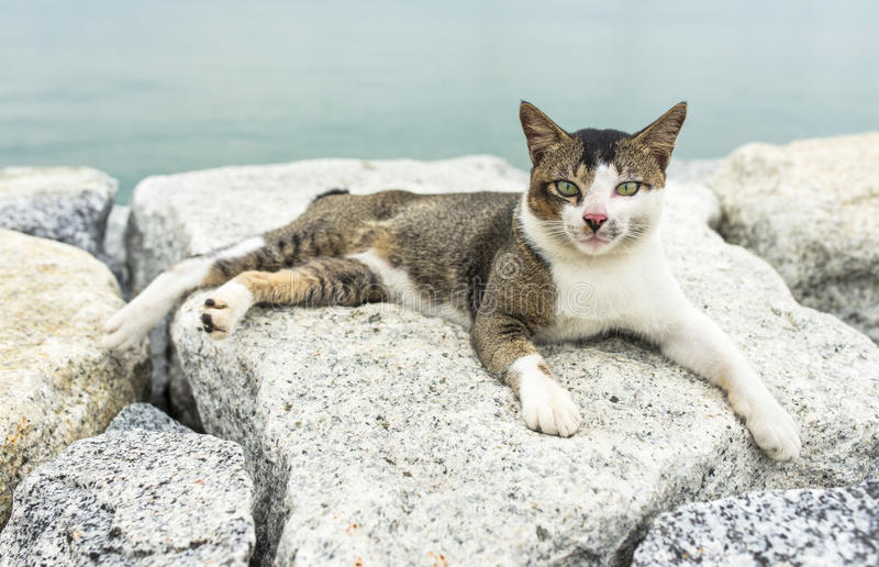 Crouching Cat. Male stray cat crouching on rock with the sea at the background royalty free stock photo