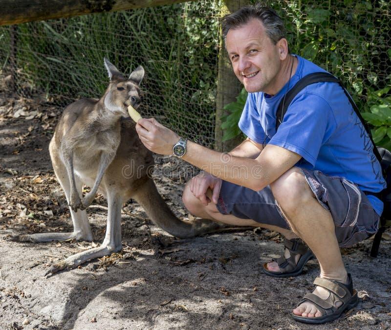 Crouching man feeds a beautiful very hungry kangaroo, Australia royalty free stock images