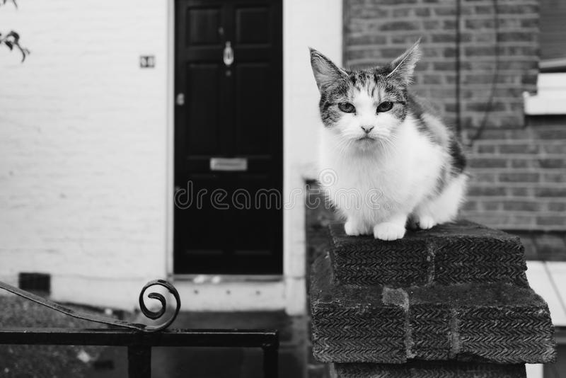 Crouching Rural Cat in Black and White. A cute rural cat crouching with an alert royalty free stock photography