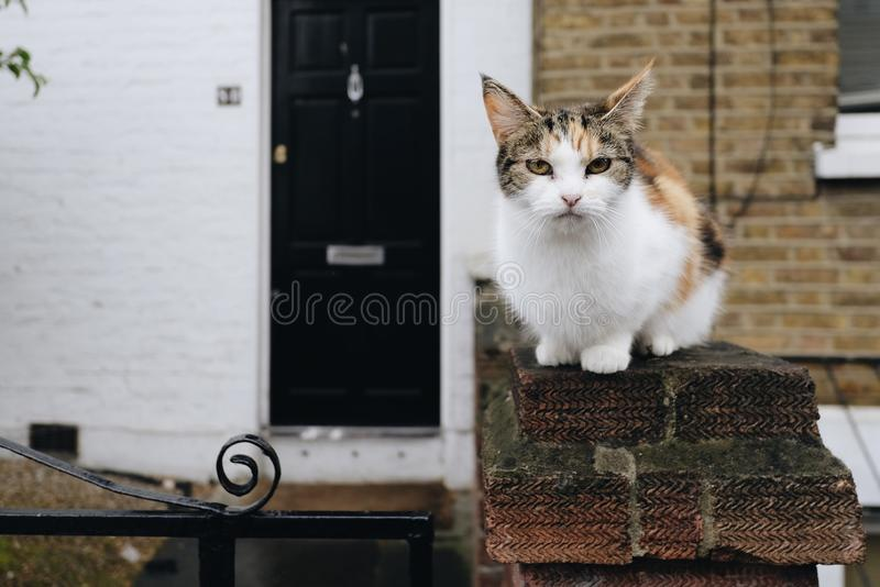 Crouching Rural Cat. A cute rural cat crouching with an alert expression stock photo