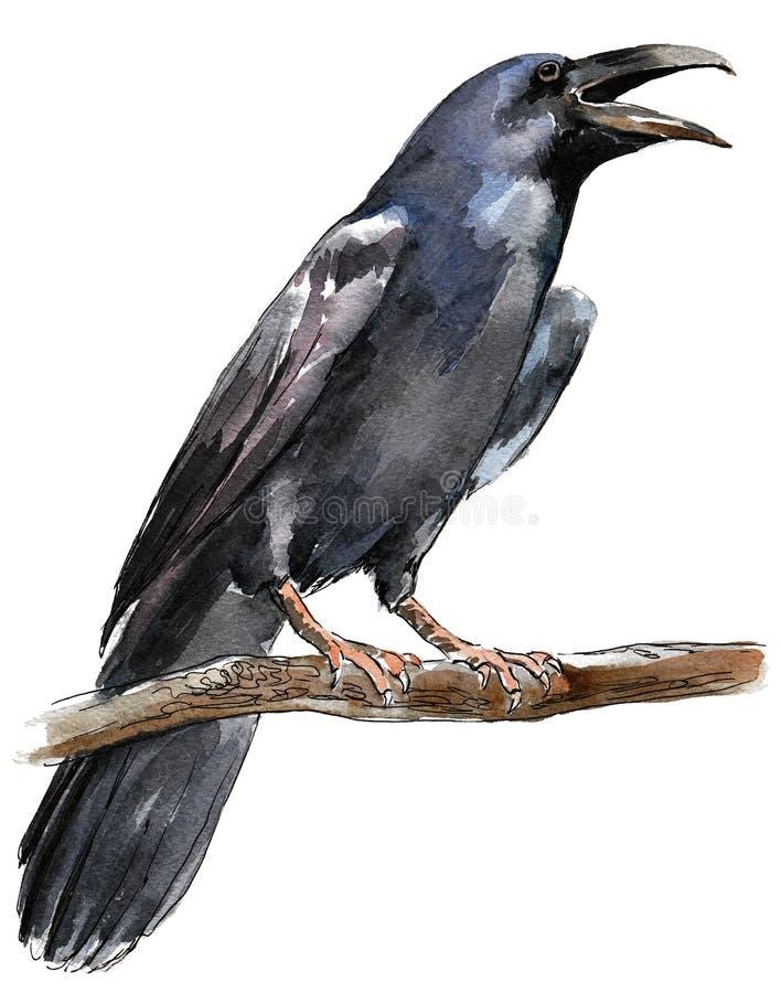 Crow stock illustration