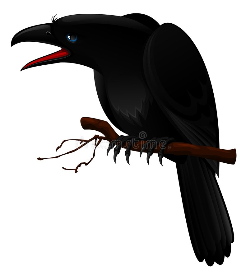 Crow. Illustration of black crow sitting on branch
