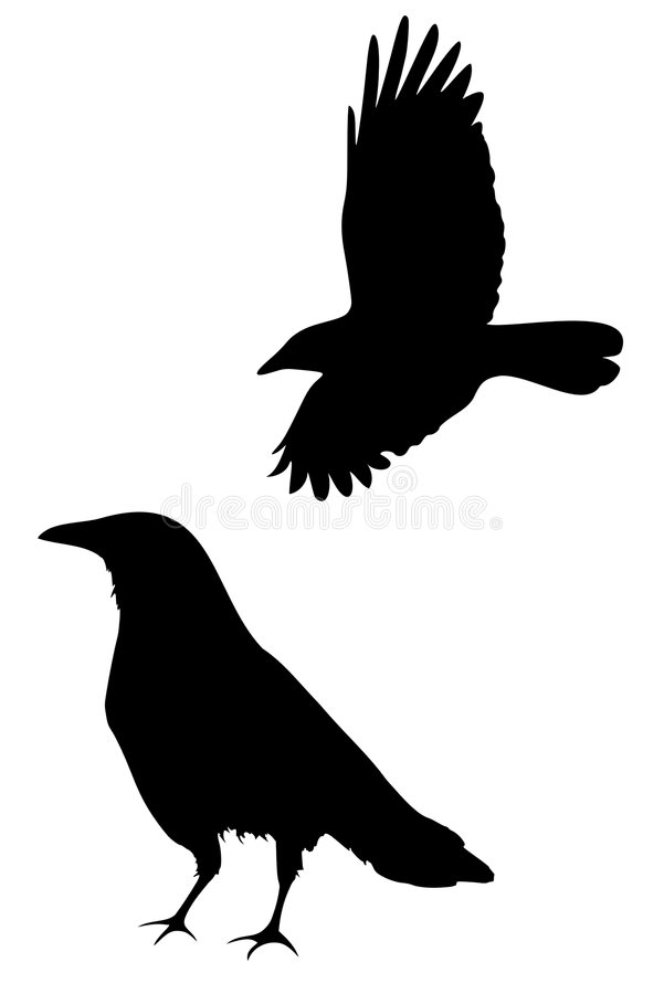Download Crow stock vector. Illustration of silhouette, wings, isolated - 8423828